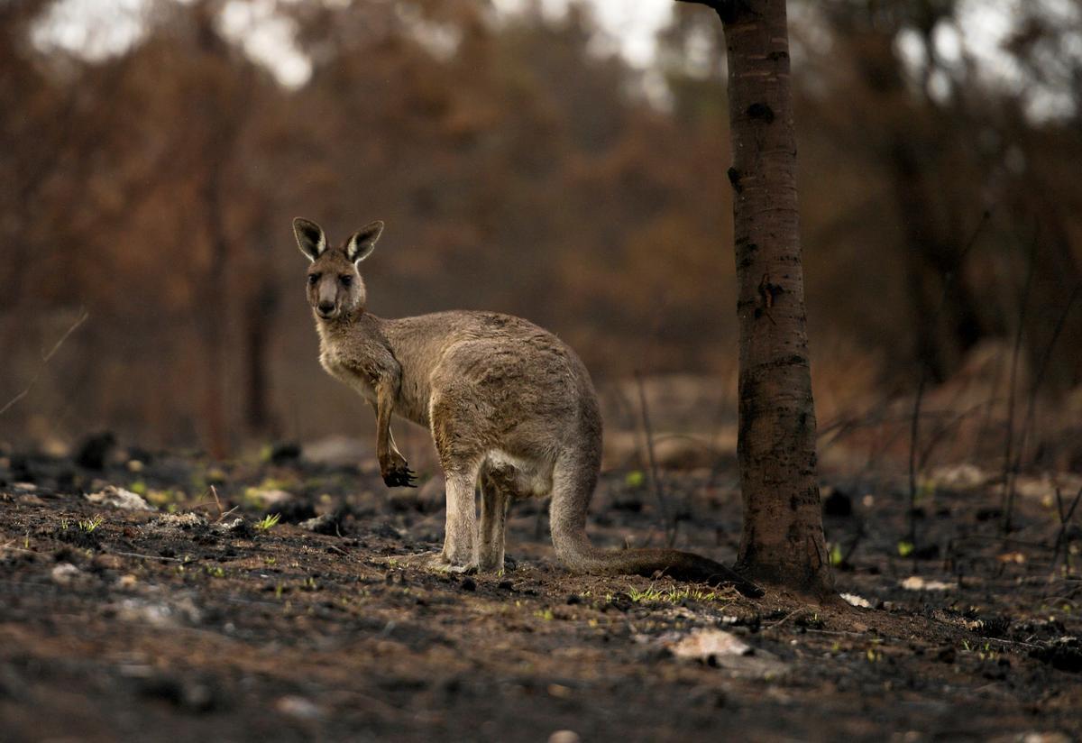 L'Australie lance une nouvelle évacuation massive face à de nouveaux incendies toujours plus gigantesques