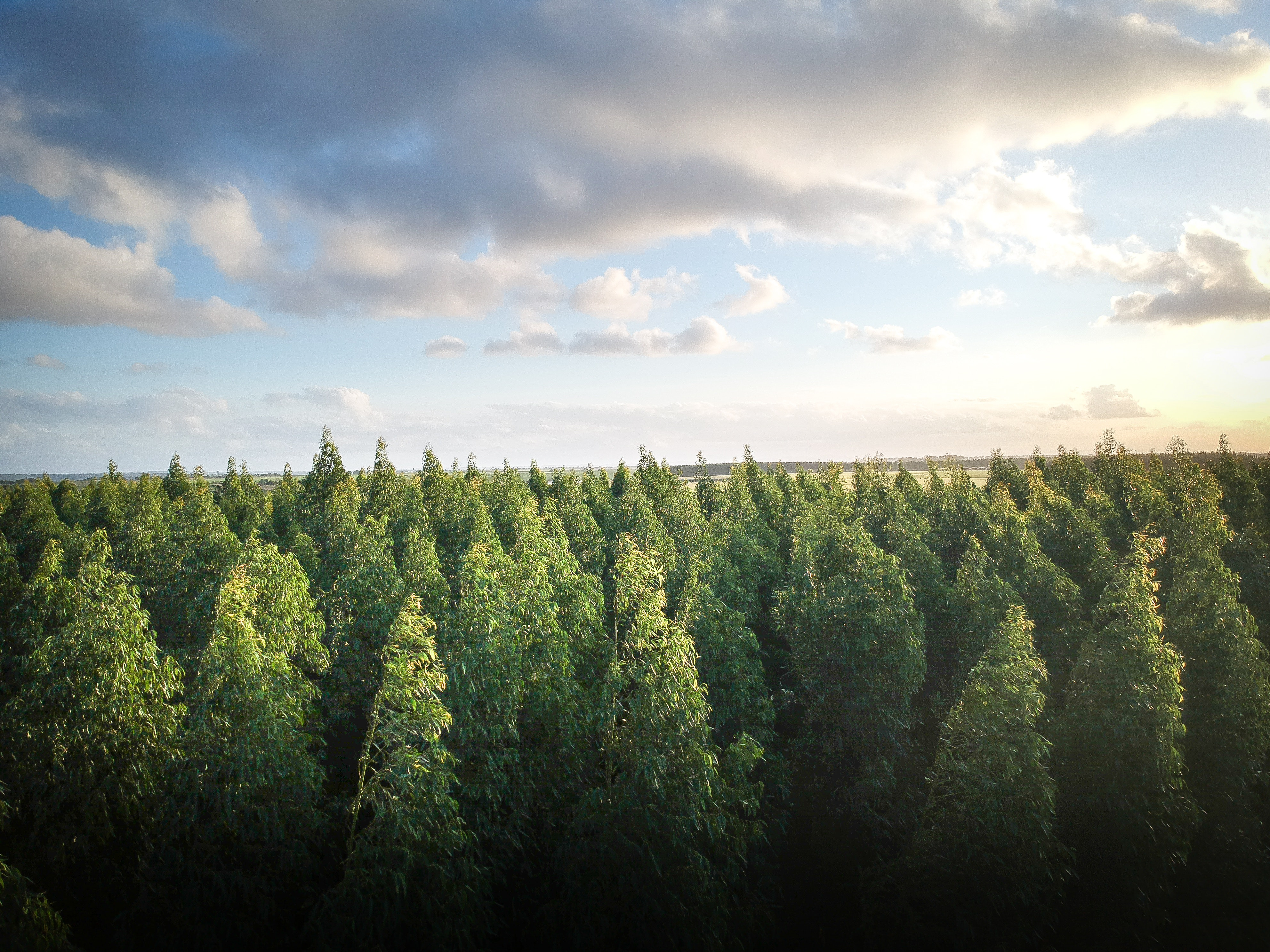 Les multinationales investissent dans la sauvegarde des forêts
